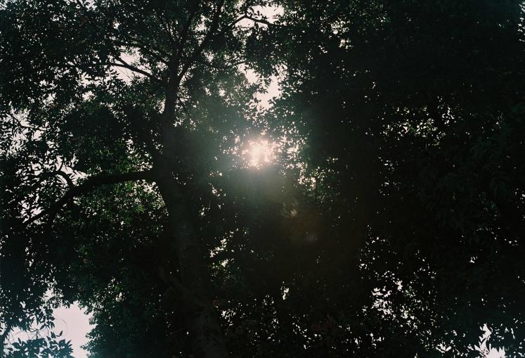 taman balaikota yashica lynx 14e