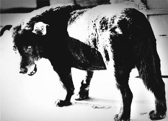 daido-moriyama-stray-dog