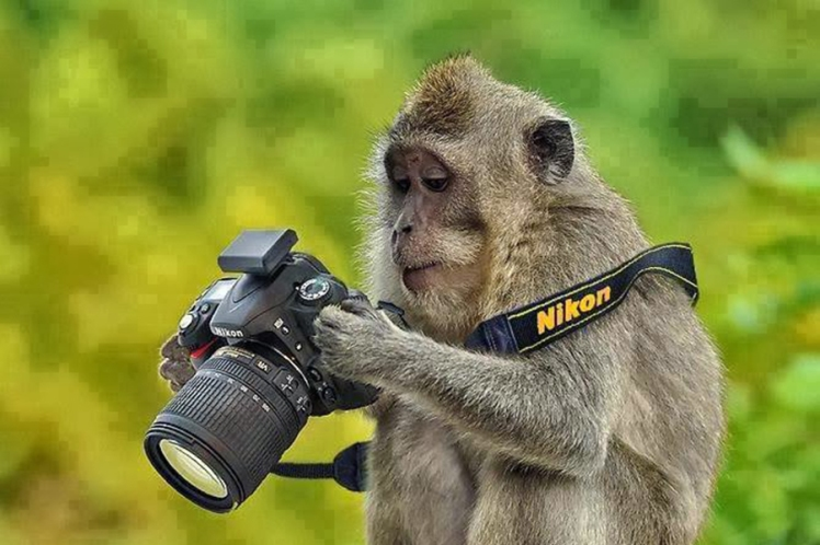monkey-with-dslr