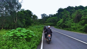 jalan raya hutan sancang
